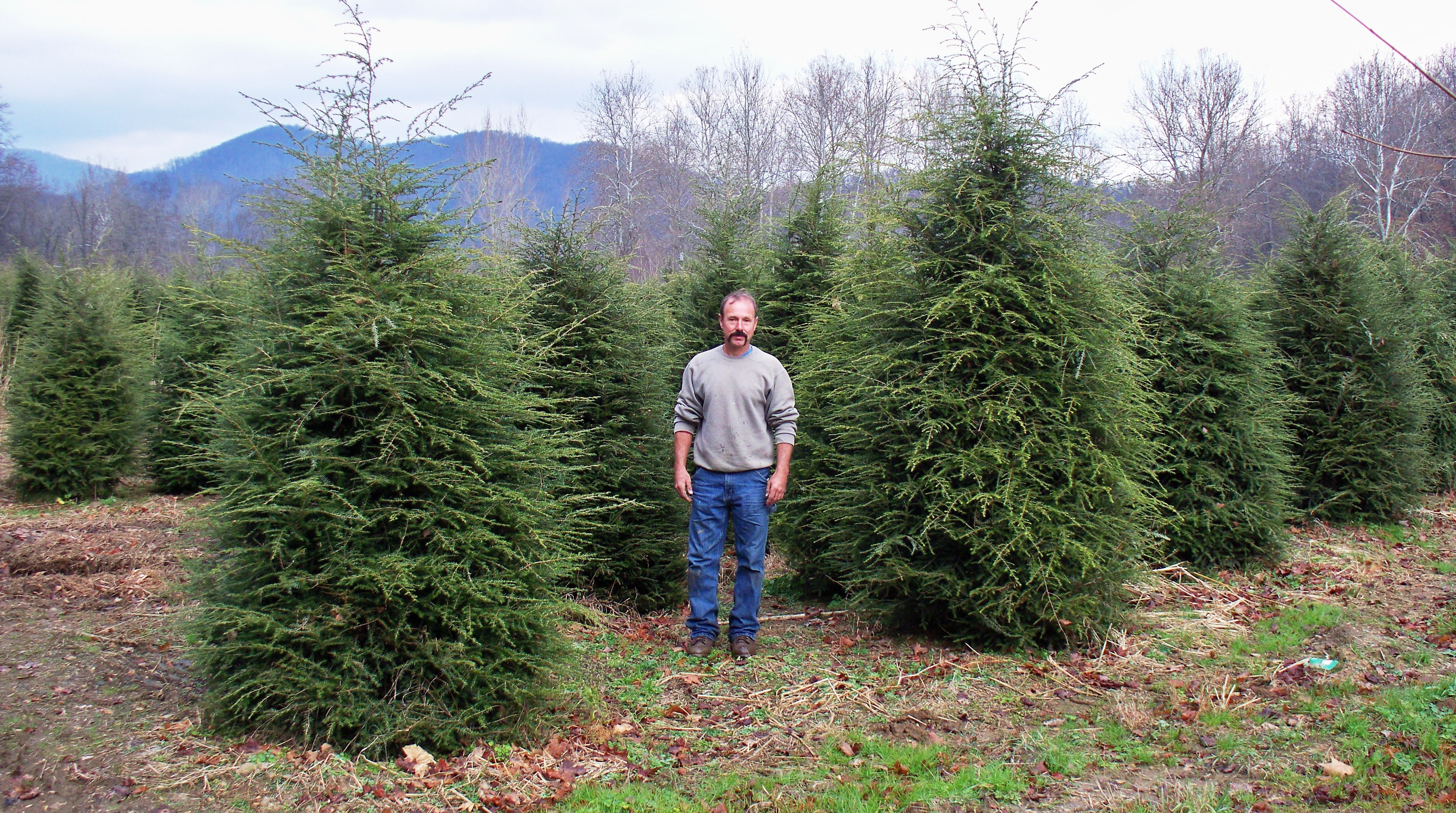 """Search Results for """"Canadian Hemlock Tree"""" – carinteriordesign"""